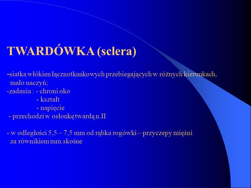 TWARDÓWKA (sclera) -siatka włókien łącznotkankowych przebiegających w różnych kierunkach, mało naczyń;