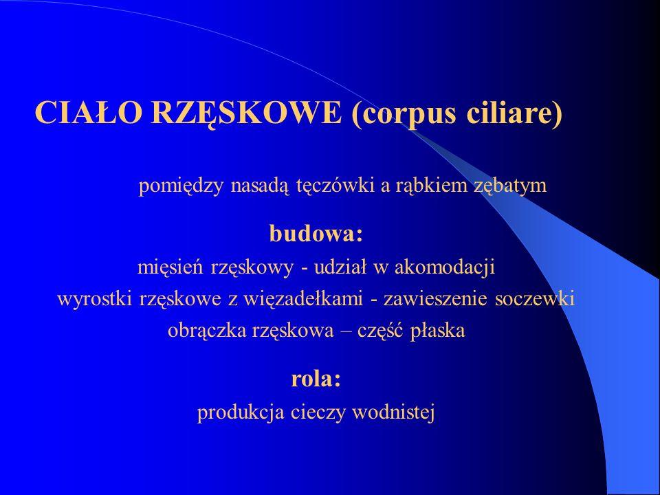 CIAŁO RZĘSKOWE (corpus ciliare)