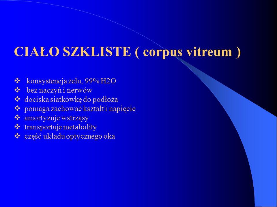 CIAŁO SZKLISTE ( corpus vitreum )