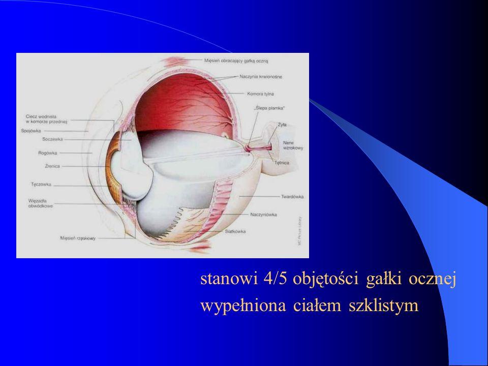 stanowi 4/5 objętości gałki ocznej