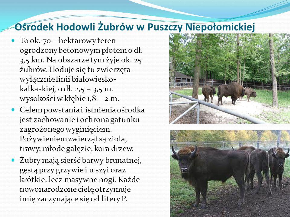 Ośrodek Hodowli Żubrów w Puszczy Niepołomickiej