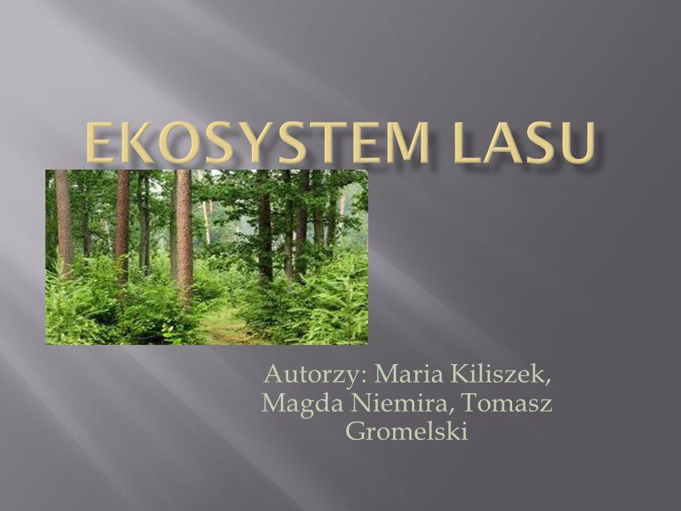 Autorzy: Maria Kiliszek, Magda Niemira, Tomasz Gromelski