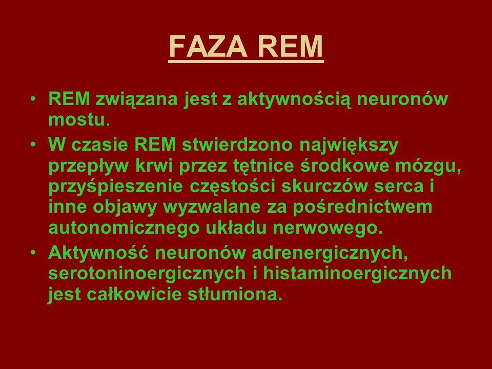 FAZA REM REM związana jest z aktywnością neuronów mostu.