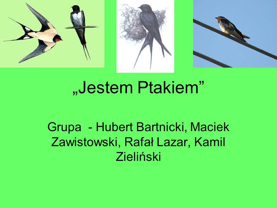 """""""Jestem Ptakiem Grupa - Hubert Bartnicki, Maciek Zawistowski, Rafał Lazar, Kamil Zieliński"""