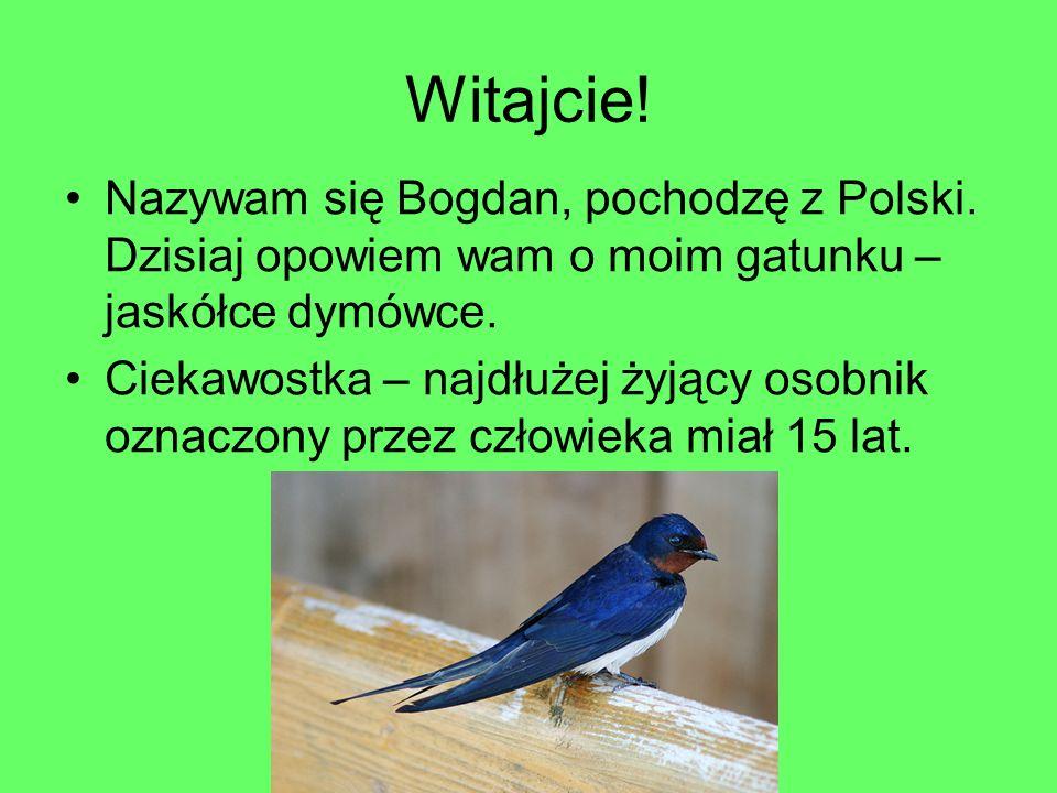 Witajcie! Nazywam się Bogdan, pochodzę z Polski. Dzisiaj opowiem wam o moim gatunku – jaskółce dymówce.