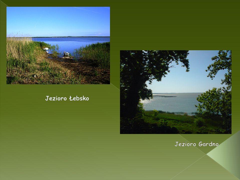 Jezioro Łebsko Jezioro Gardno