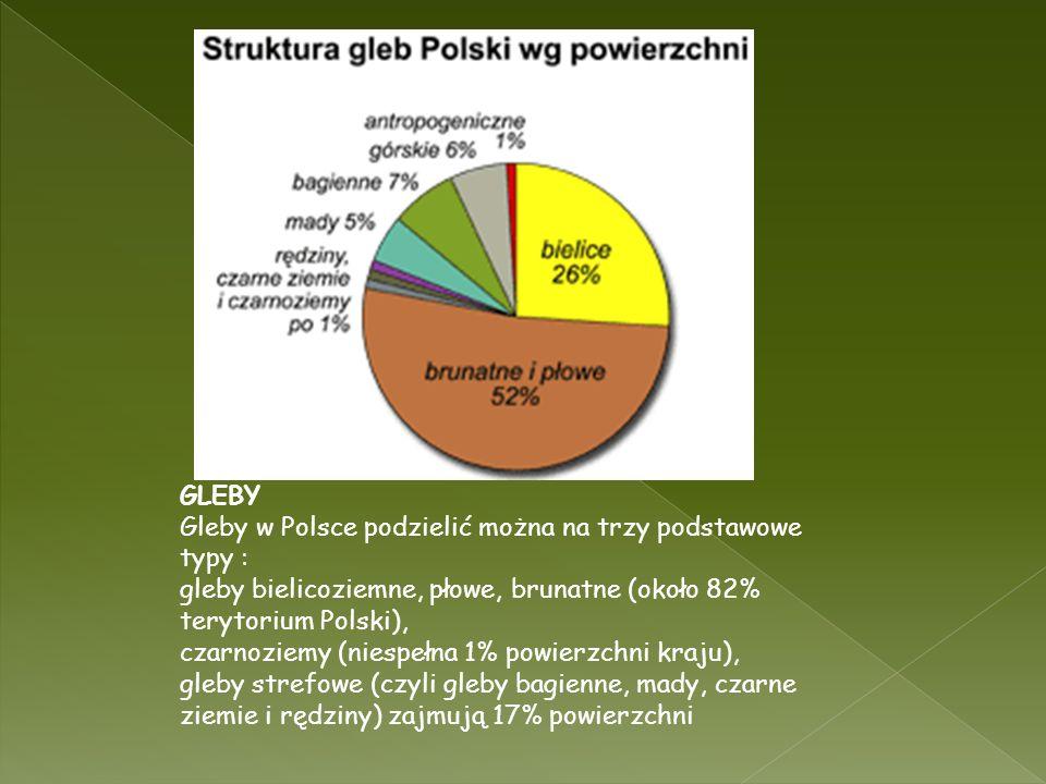 GLEBY Gleby w Polsce podzielić można na trzy podstawowe typy : gleby bielicoziemne, płowe, brunatne (około 82% terytorium Polski),
