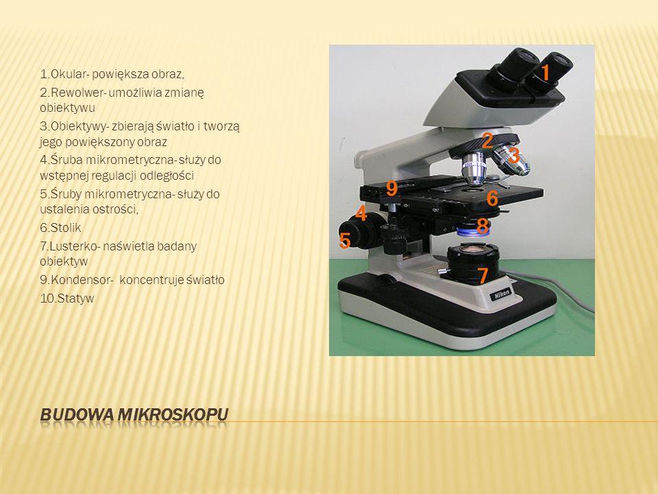 Budowa mikroskopu 1.Okular- powiększa obraz,