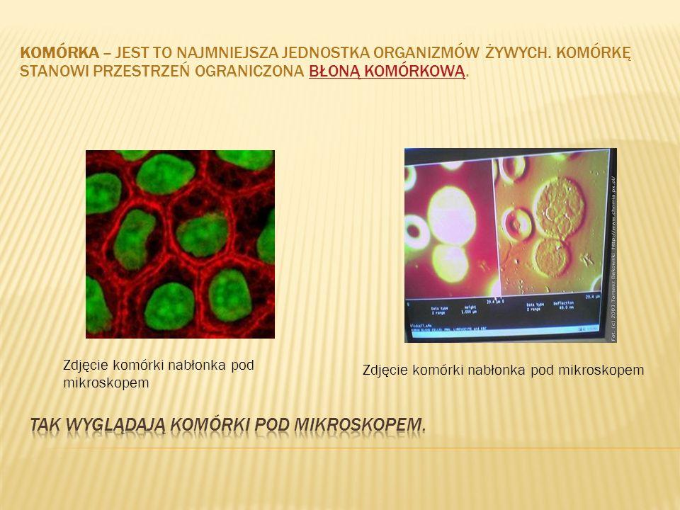Tak wyglądają komórki pod mikroskopem.