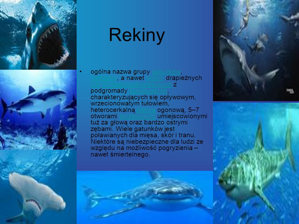 Rekiny