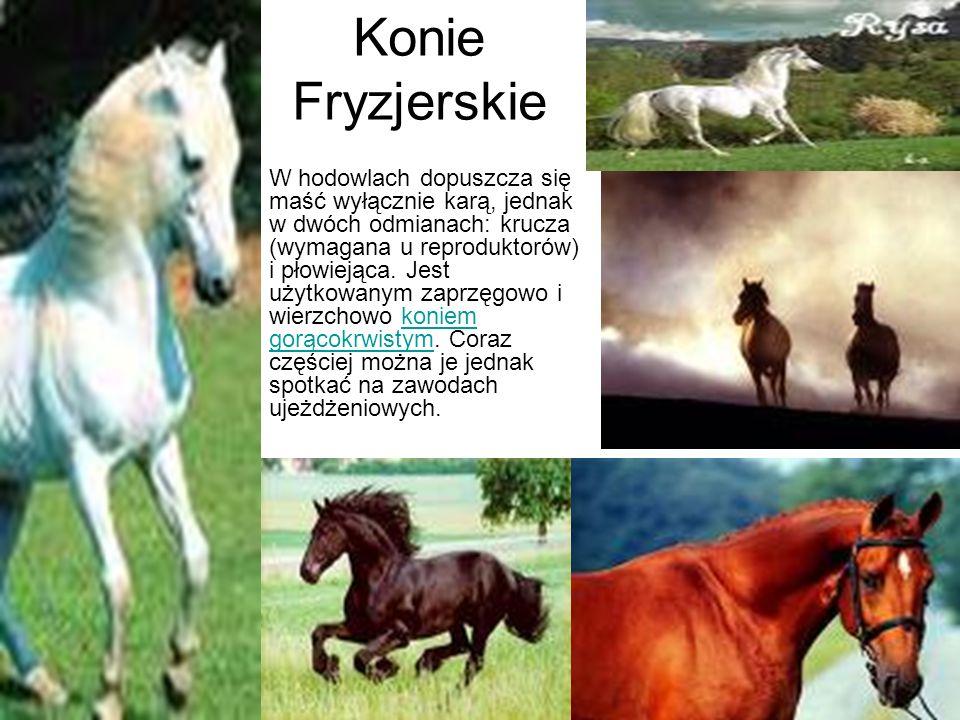 Konie Fryzjerskie