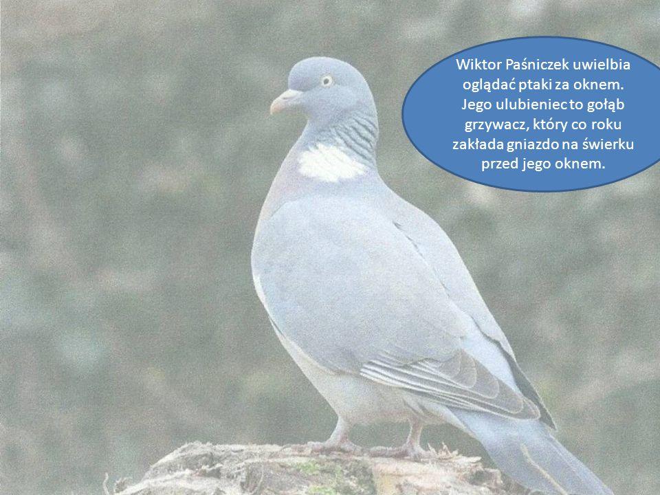 Wiktor Paśniczek uwielbia oglądać ptaki za oknem