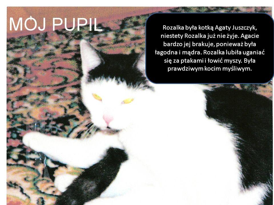 Rozalka była kotką Agaty Juszczyk, niestety Rozalka już nie żyje