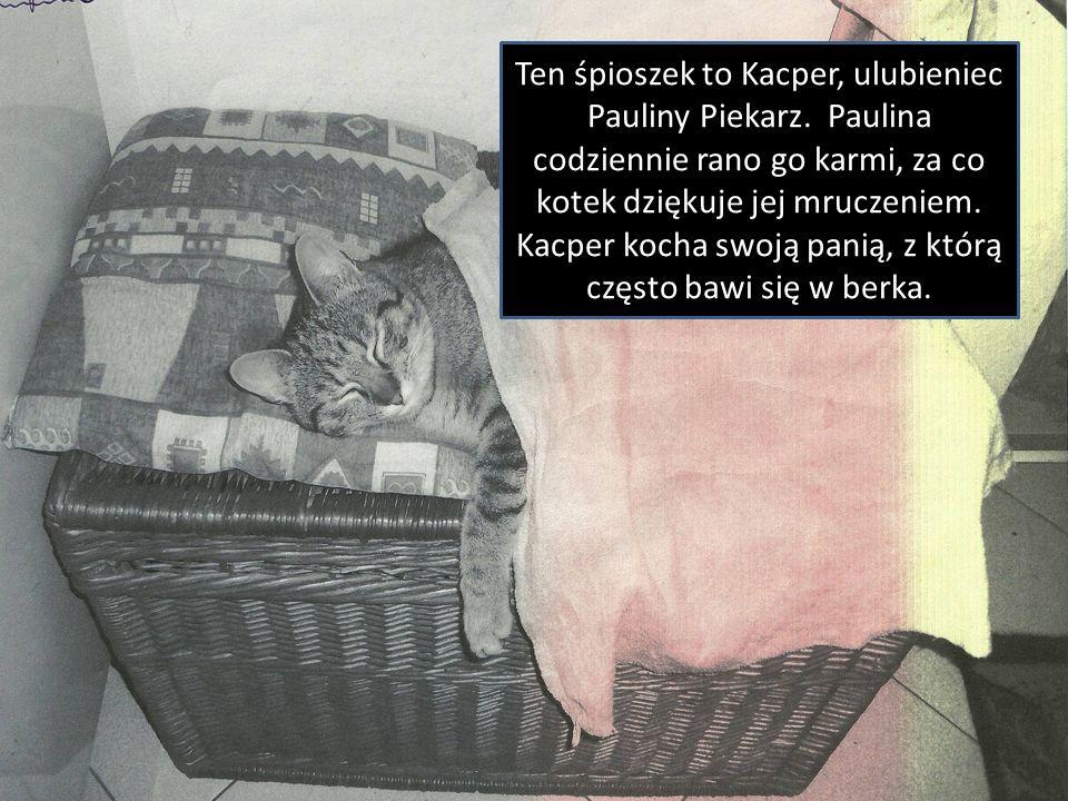 Ten śpioszek to Kacper, ulubieniec Pauliny Piekarz