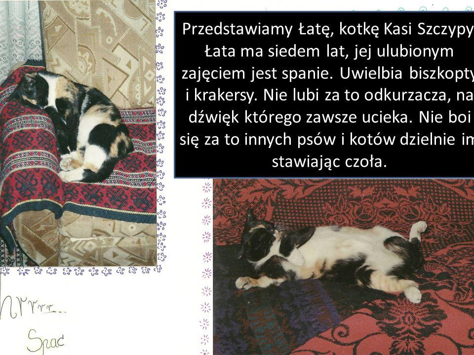Przedstawiamy Łatę, kotkę Kasi Szczypy