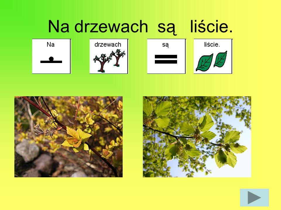 Na drzewach są liście.