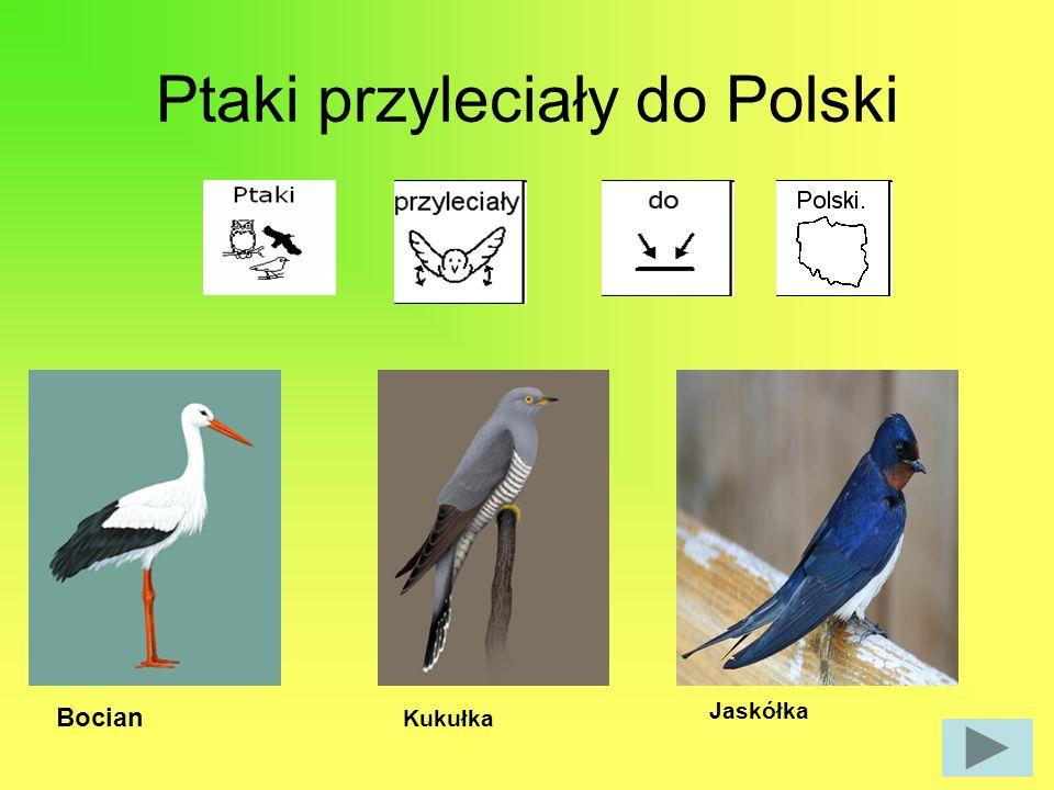 Ptaki przyleciały do Polski