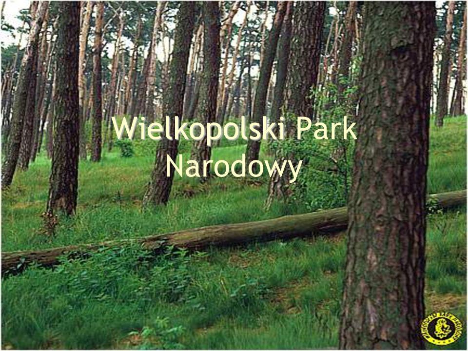 Wielkopolski Park Narodowy