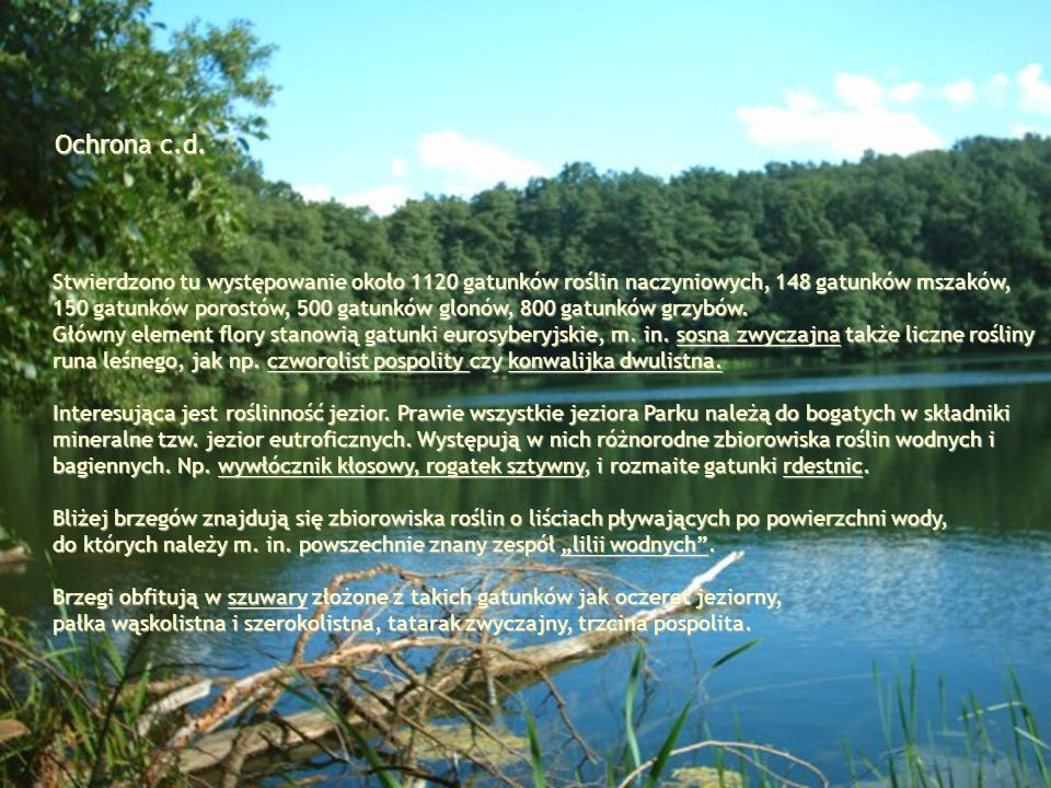 Ochrona c.d. Stwierdzono tu występowanie około 1120 gatunków roślin naczyniowych, 148 gatunków mszaków,
