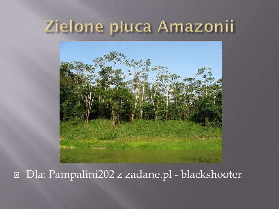 Zielone płuca Amazonii