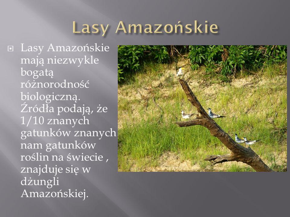 Lasy Amazońskie