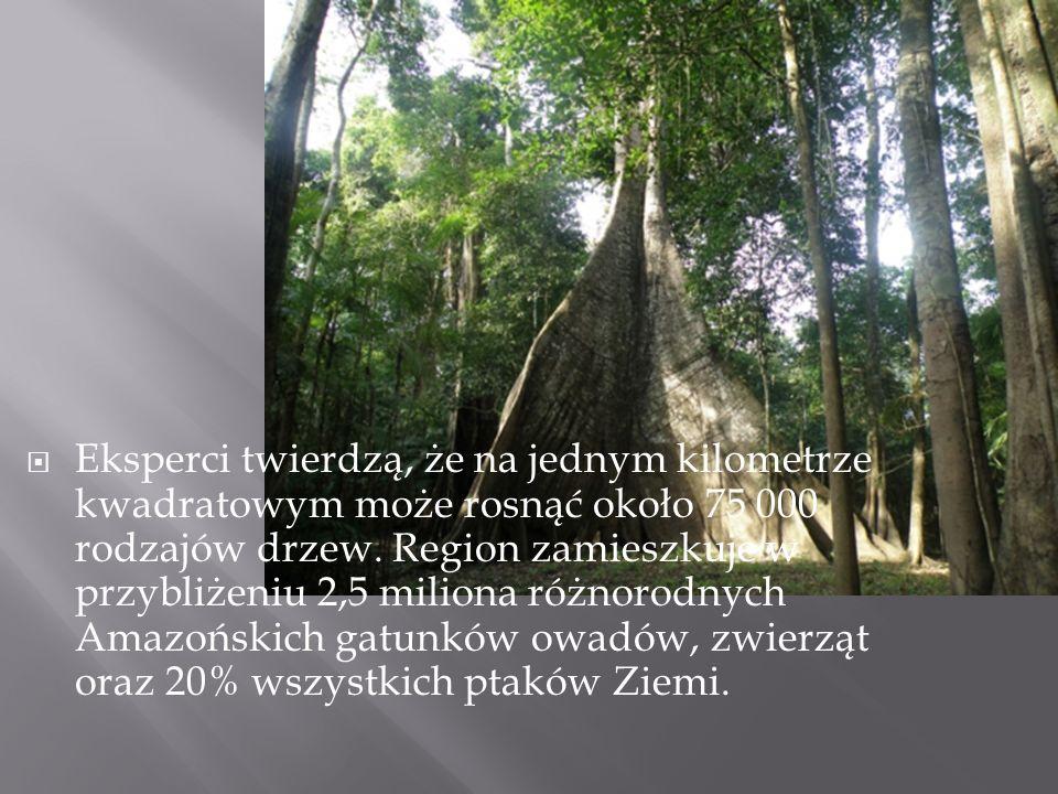 Eksperci twierdzą, że na jednym kilometrze kwadratowym może rosnąć około 75 000 rodzajów drzew.