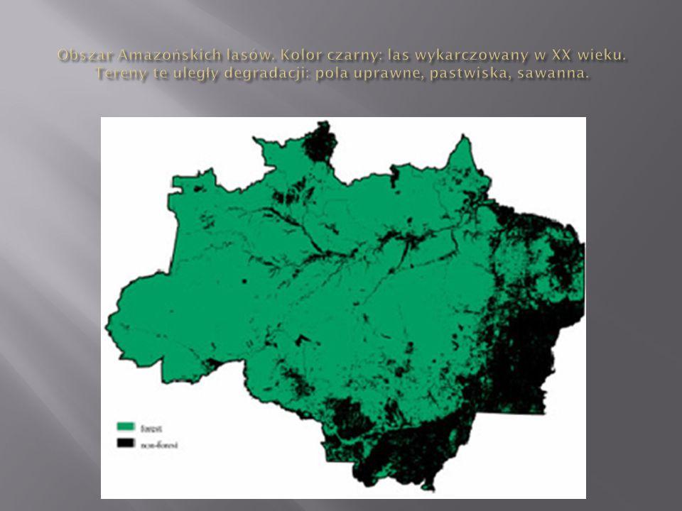 Obszar Amazońskich lasów. Kolor czarny: las wykarczowany w XX wieku