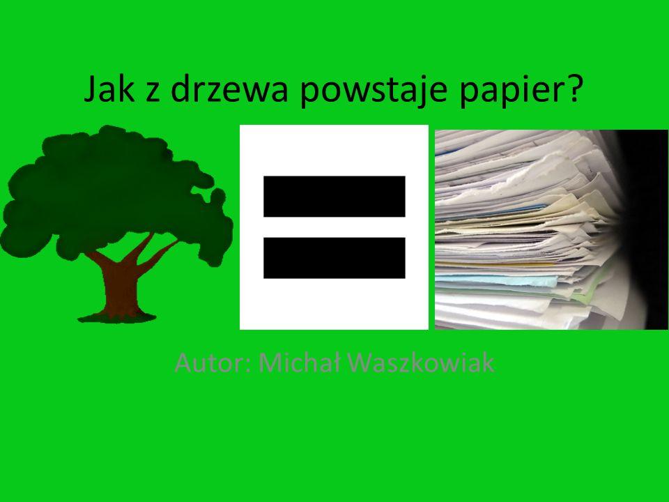 Jak z drzewa powstaje papier