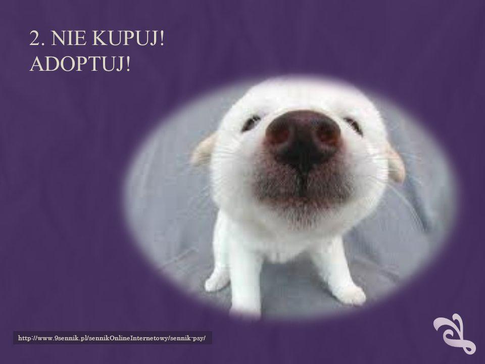 2. Nie kupuj! Adoptuj! http://www.9sennik.pl/sennikOnlineInternetowy/sennik-psy/