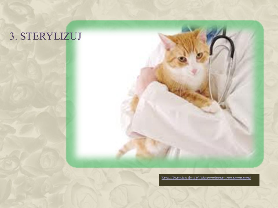 3. sterylizuj http://kotipies.duu.pl/pies-z-wizyta-u-weterynarza/