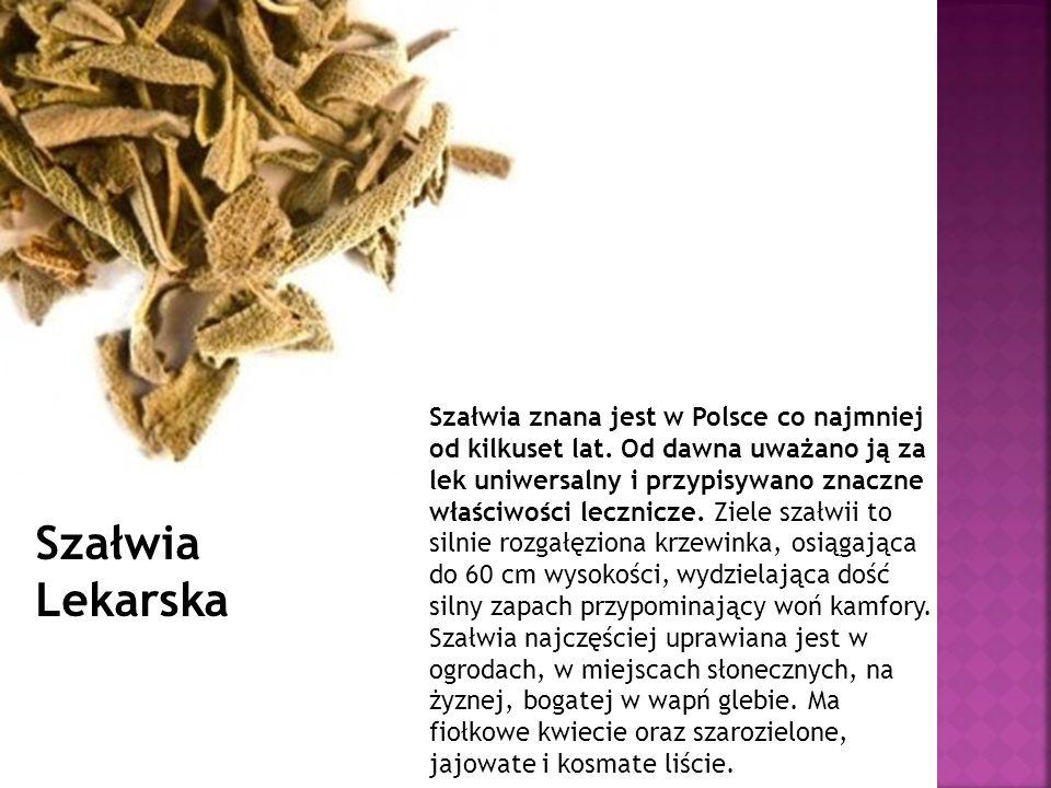 Szałwia znana jest w Polsce co najmniej od kilkuset lat