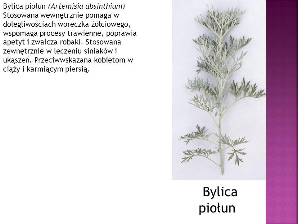 Bylica piołun (Artemisia absinthium) Stosowana wewnętrznie pomaga w dolegliwościach woreczka żółciowego, wspomaga procesy trawienne, poprawia apetyt i zwalcza robaki. Stosowana zewnętrznie w leczeniu siniaków i ukąszeń. Przeciwwskazana kobietom w ciąży i karmiącym piersią.