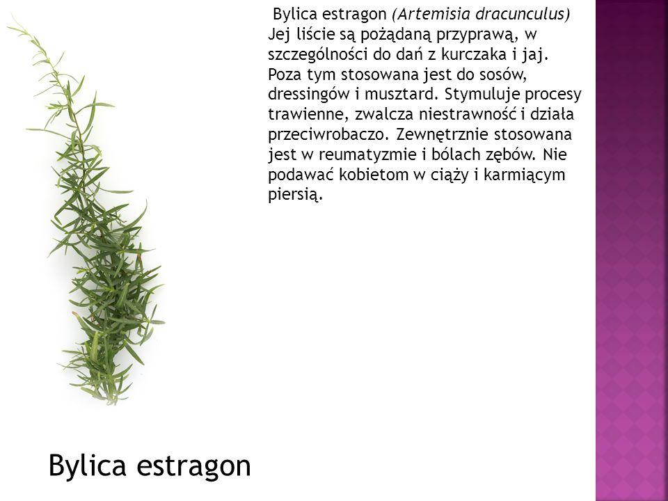 Bylica estragon (Artemisia dracunculus) Jej liście są pożądaną przyprawą, w szczególności do dań z kurczaka i jaj. Poza tym stosowana jest do sosów, dressingów i musztard. Stymuluje procesy trawienne, zwalcza niestrawność i działa przeciwrobaczo. Zewnętrznie stosowana jest w reumatyzmie i bólach zębów. Nie podawać kobietom w ciąży i karmiącym piersią.