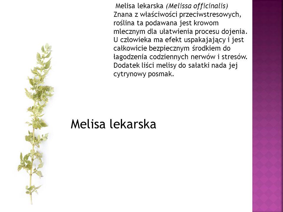 Melisa lekarska (Melissa officinalis) Znana z właściwości przeciwstresowych, roślina ta podawana jest krowom mlecznym dla ułatwienia procesu dojenia. U człowieka ma efekt uspakajający i jest całkowicie bezpiecznym środkiem do łagodzenia codziennych nerwów i stresów. Dodatek liści melisy do sałatki nada jej cytrynowy posmak.