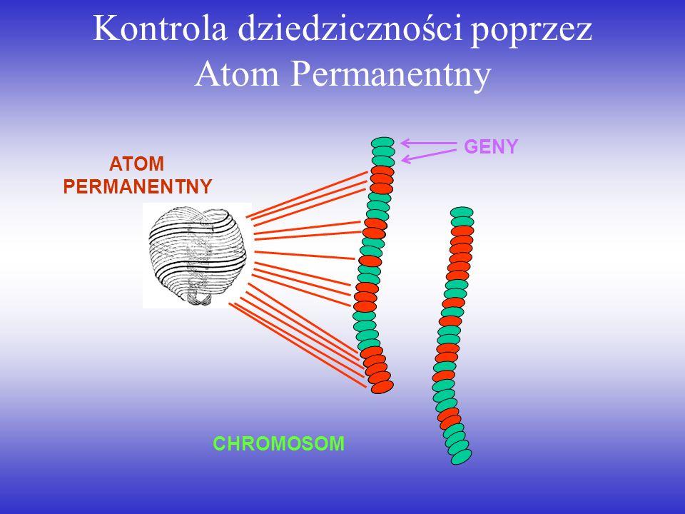 Kontrola dziedziczności poprzez Atom Permanentny