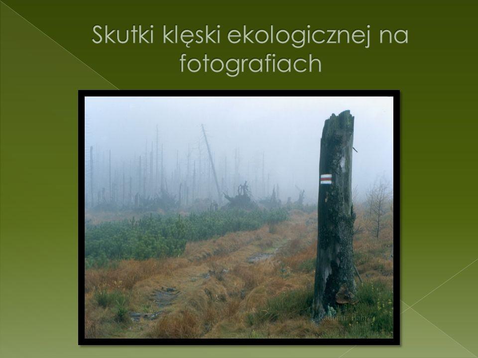 Skutki klęski ekologicznej na fotografiach