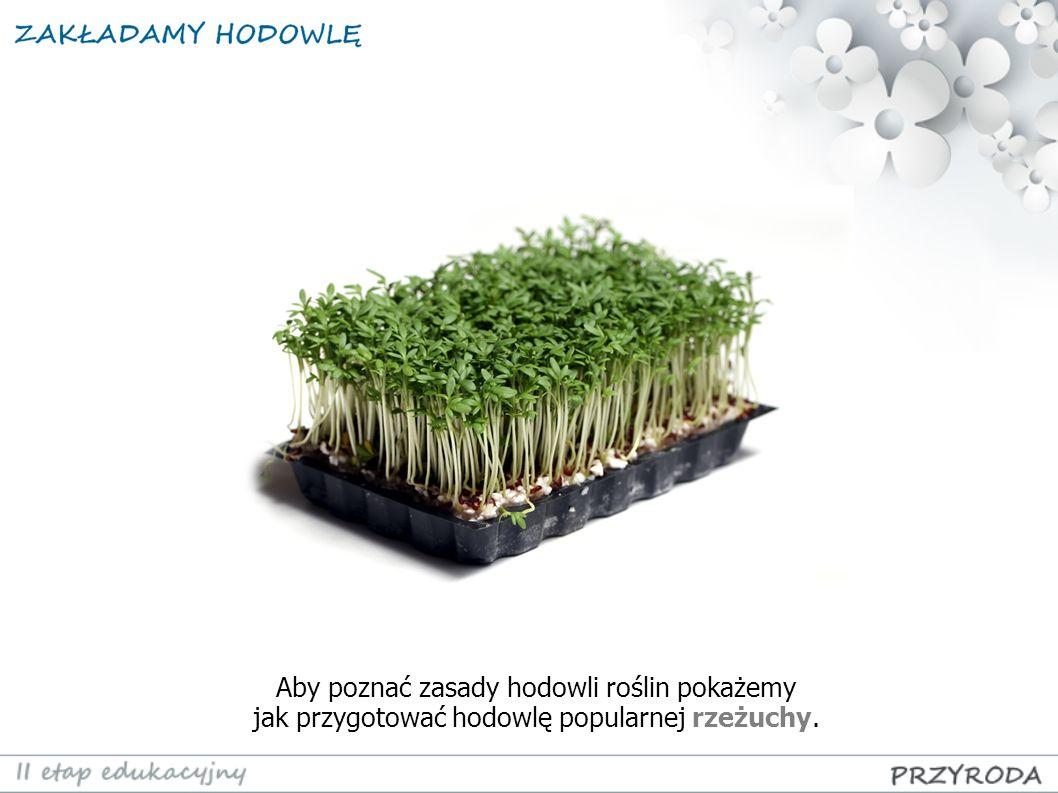 Aby poznać zasady hodowli roślin pokażemy jak przygotować hodowlę popularnej rzeżuchy.