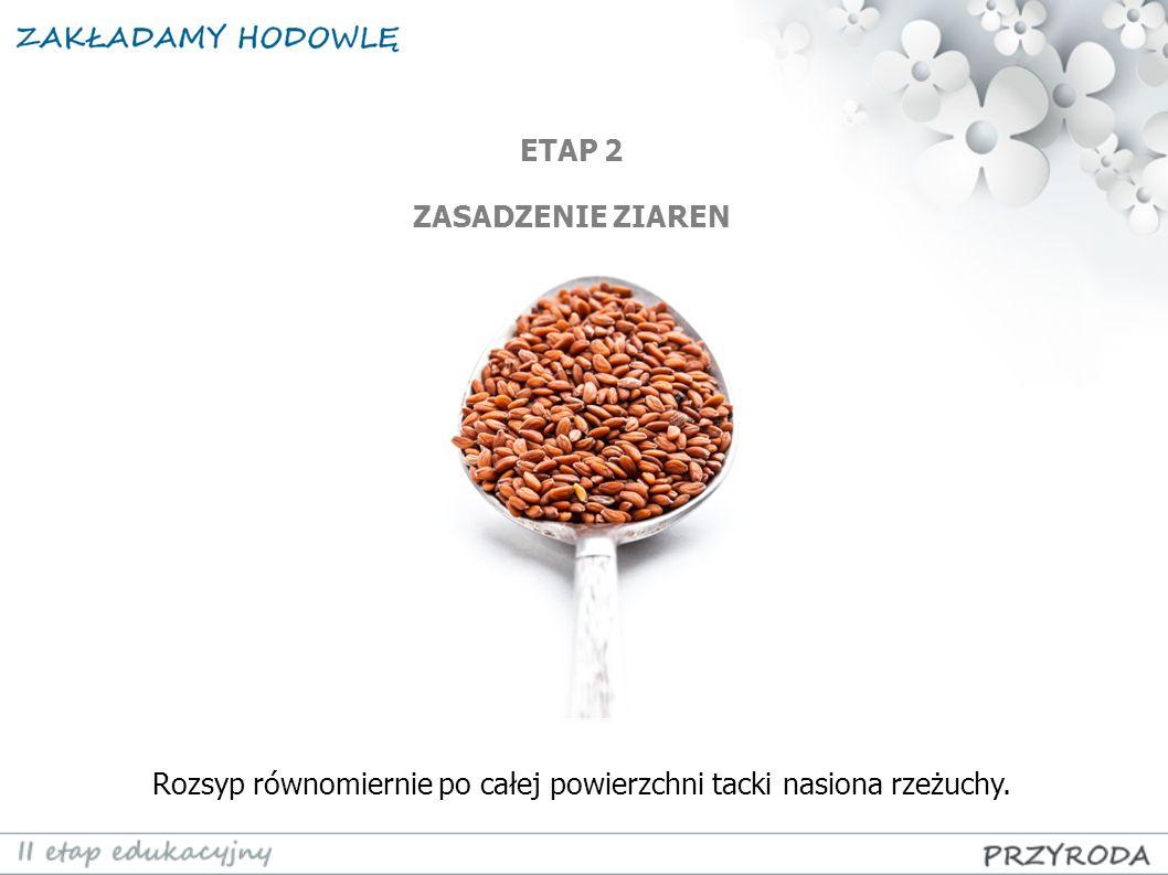 Rozsyp równomiernie po całej powierzchni tacki nasiona rzeżuchy.