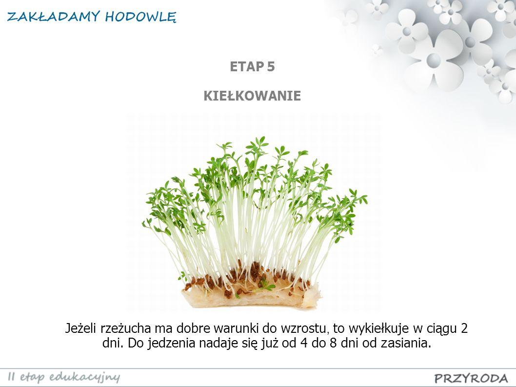 ETAP 5 KIEŁKOWANIE. Jeżeli rzeżucha ma dobre warunki do wzrostu, to wykiełkuje w ciągu 2 dni.