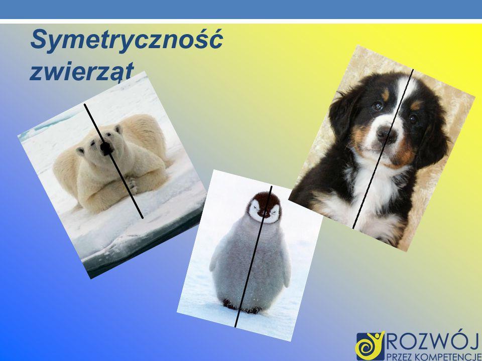Symetryczność zwierząt