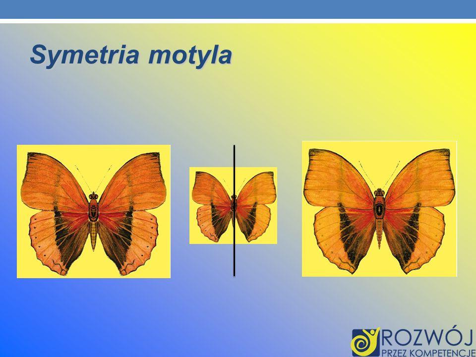 Symetria motyla