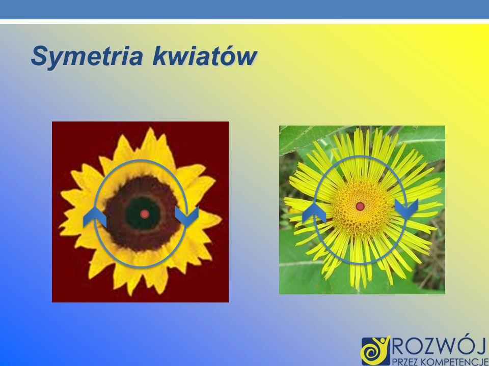 Symetria kwiatów