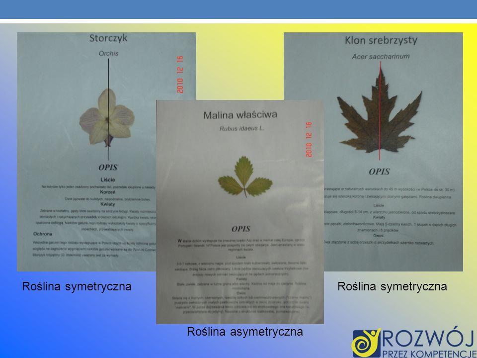 Roślina symetryczna Roślina symetryczna Roślina asymetryczna