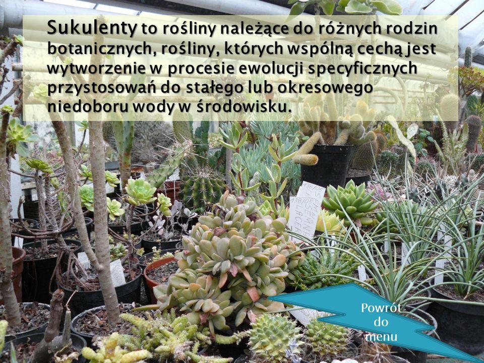 Sukulenty to rośliny należące do różnych rodzin botanicznych, rośliny, których wspólną cechą jest wytworzenie w procesie ewolucji specyficznych przystosowań do stałego lub okresowego niedoboru wody w środowisku.