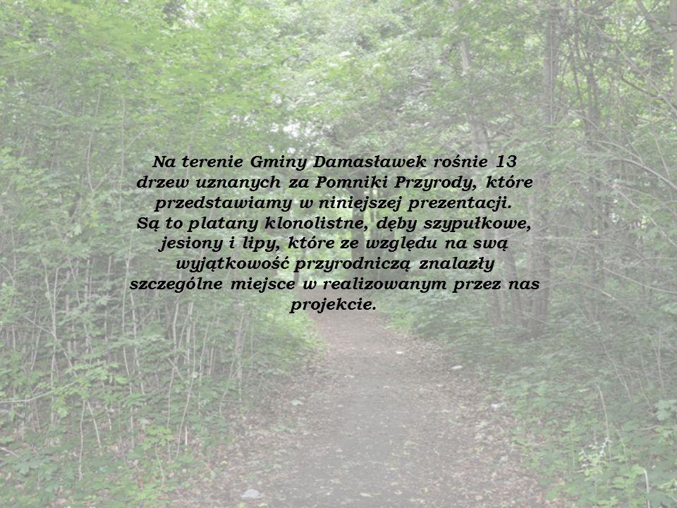 Na terenie Gminy Damasławek rośnie 13 drzew uznanych za Pomniki Przyrody, które przedstawiamy w niniejszej prezentacji.