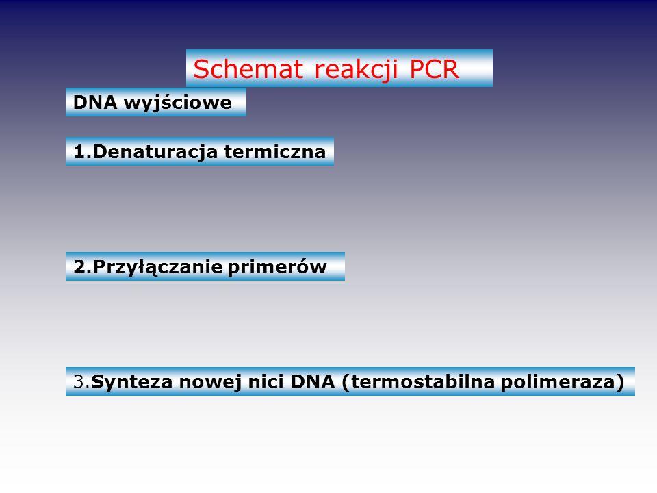 Schemat reakcji PCR DNA wyjściowe 1.Denaturacja termiczna