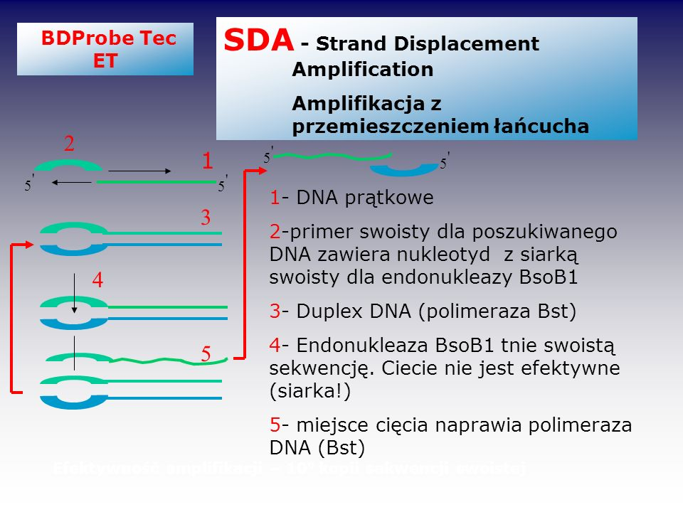 SDA - Strand Displacement Amplification