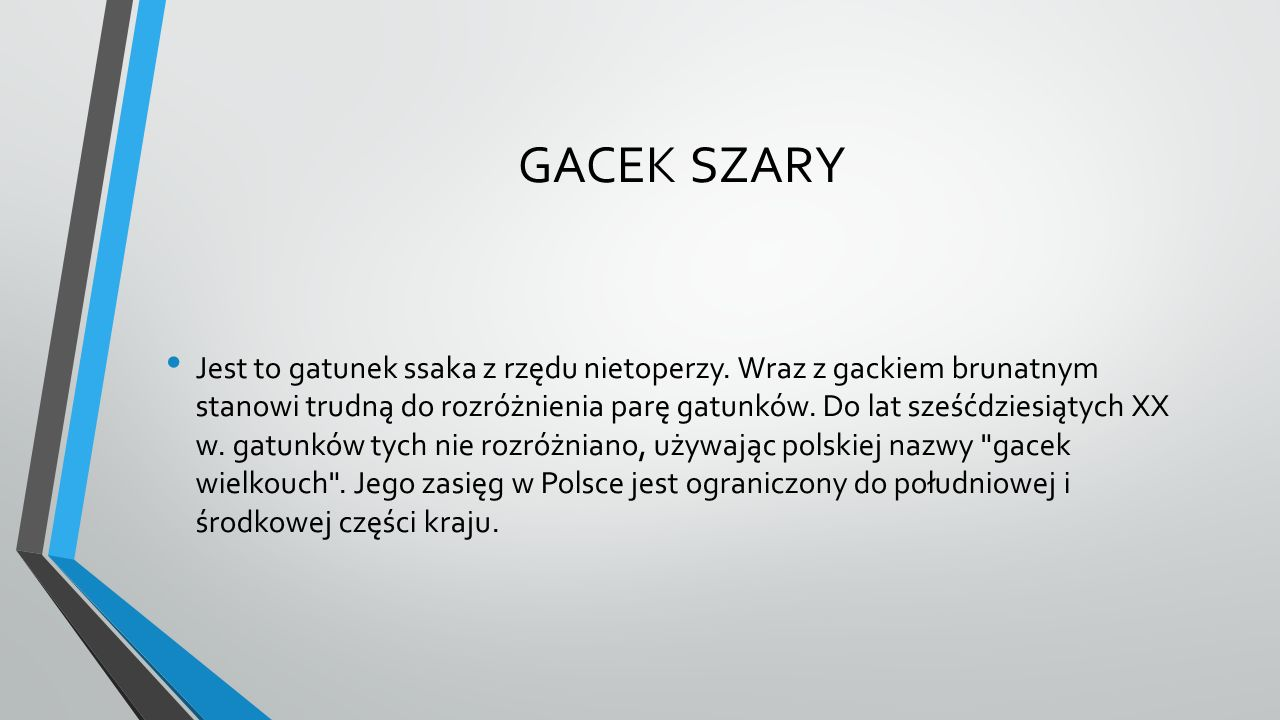 GACEK SZARY