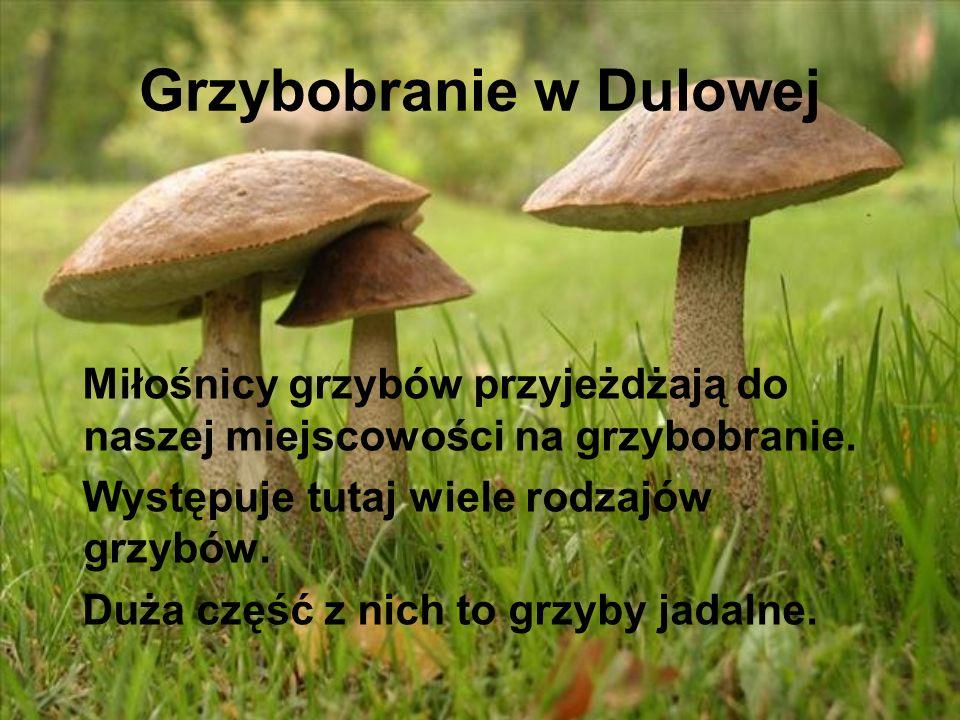 Grzybobranie w Dulowej