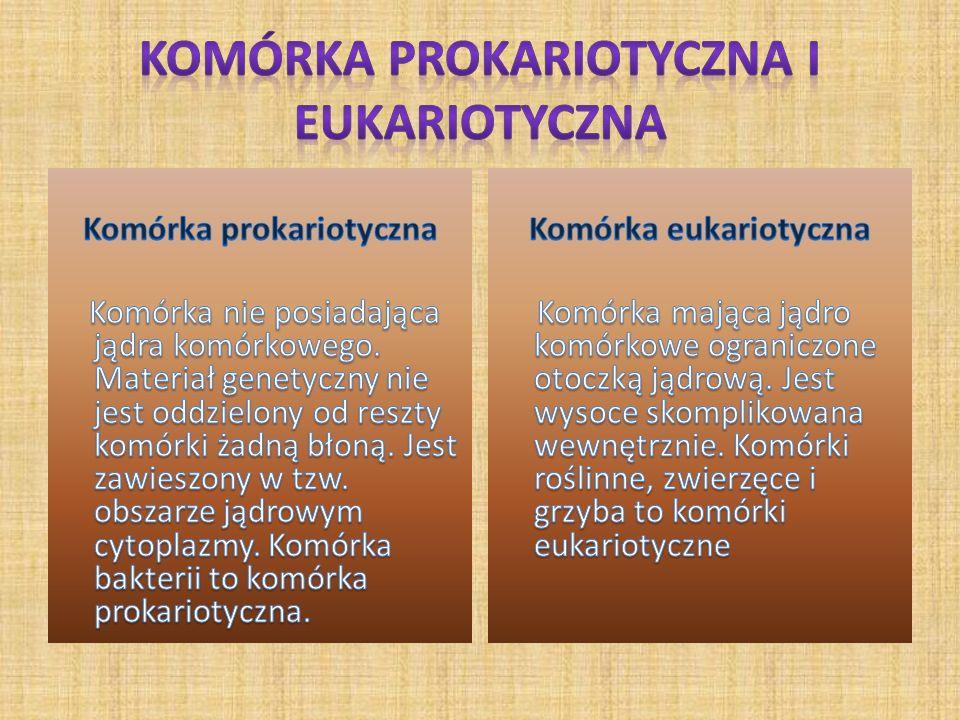Komórka prokariotyczna i eukariotyczna
